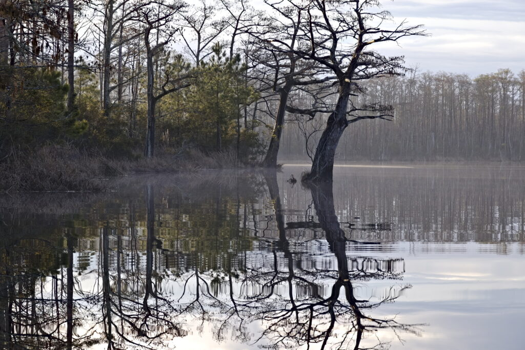 Cypress trees reflected in the still water of Milltail Creek, NC.