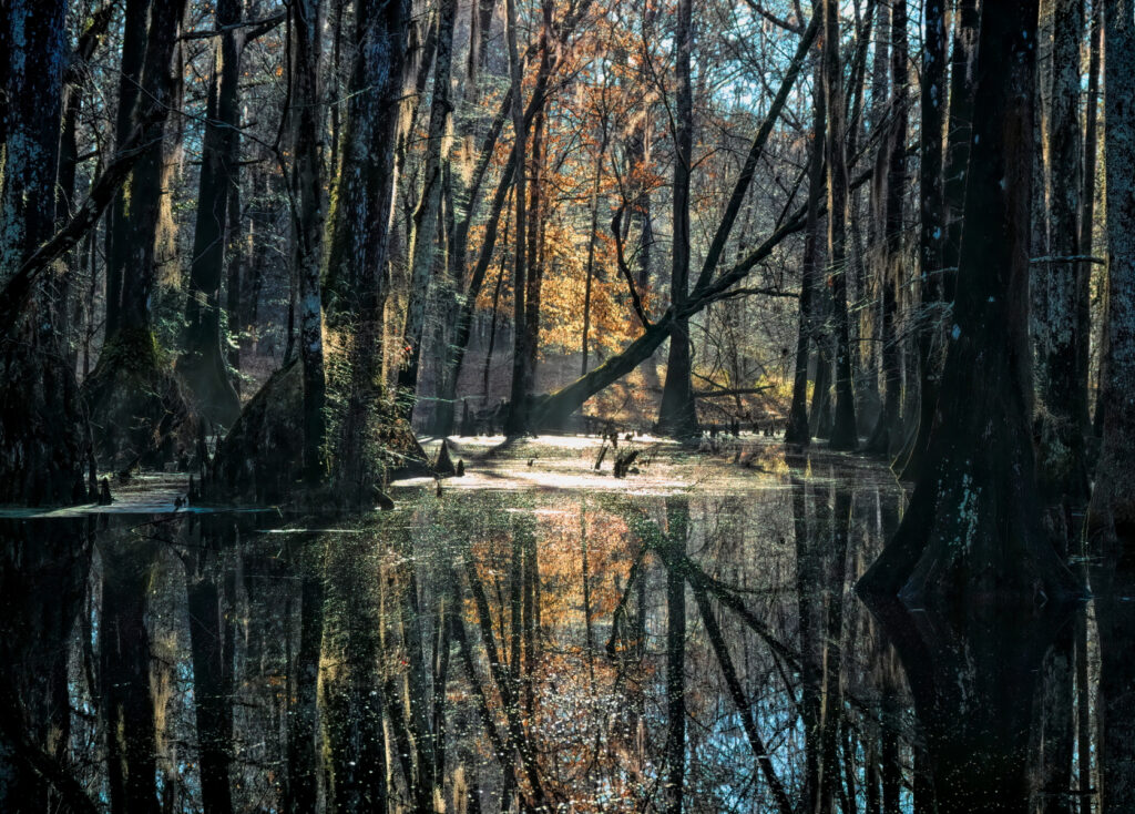 Psychogeography of Swamps